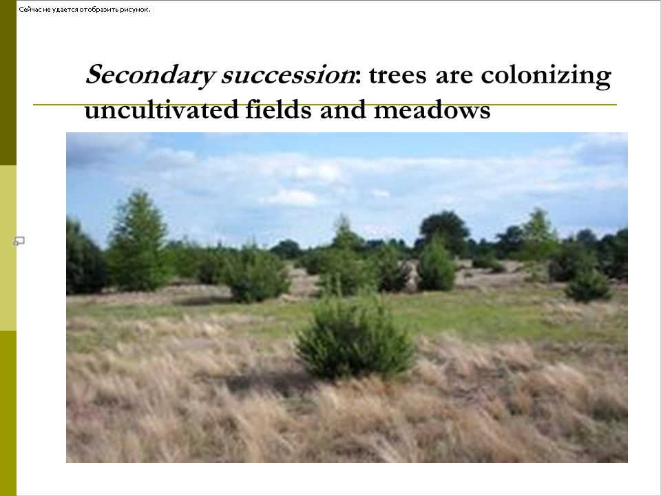 Secondary succession: trees are colonizing uncultivated fields and meadows