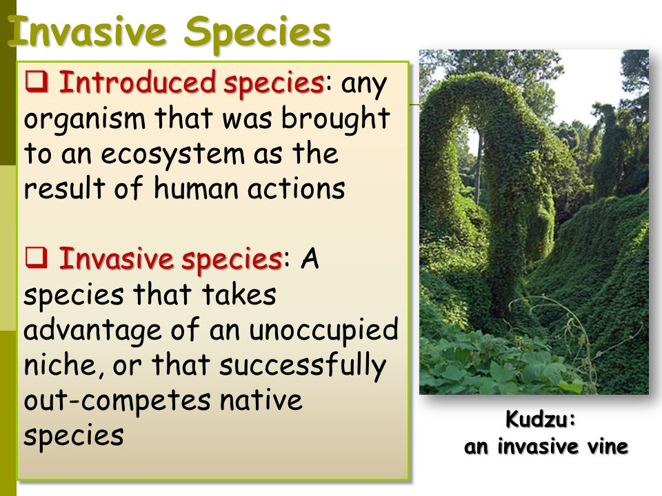 Invasive Species Introduced species: any organism that was brought to an ecosystem as the result of human actions.