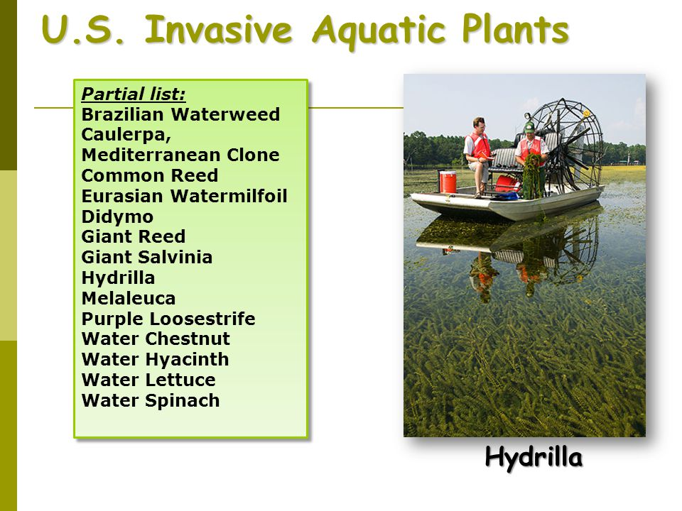 U.S. Invasive Aquatic Plants