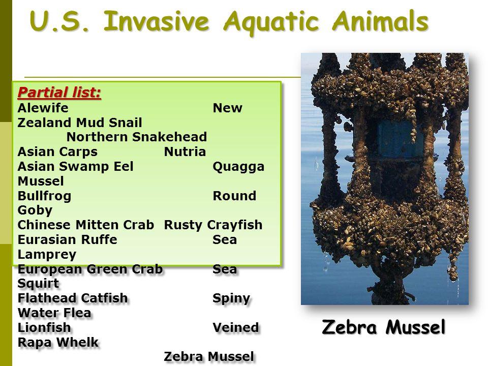 U.S. Invasive Aquatic Animals