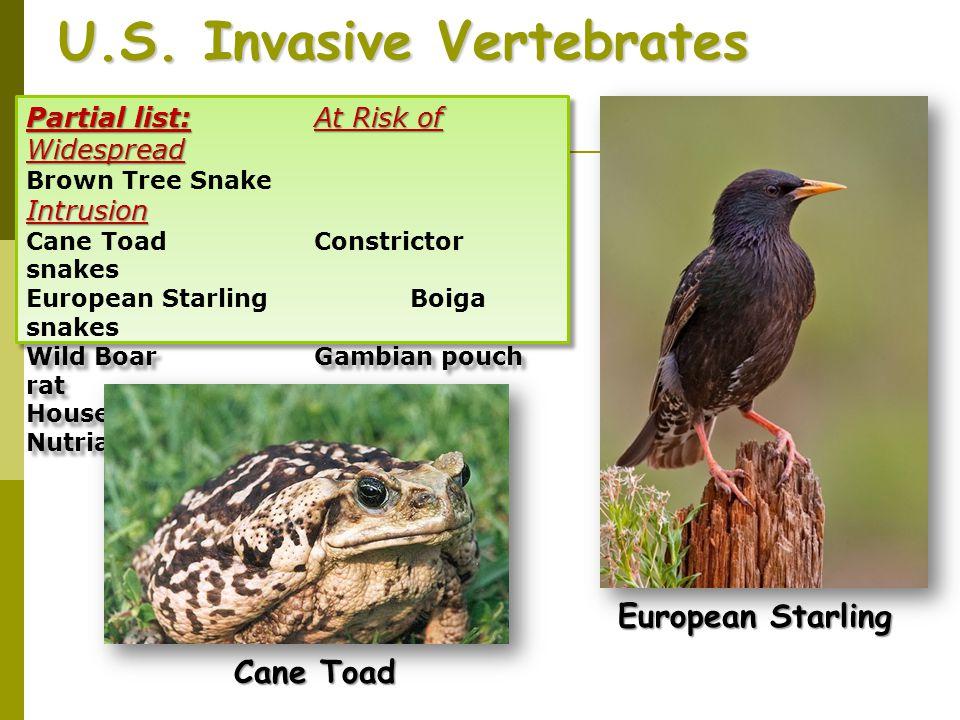 U.S. Invasive Vertebrates