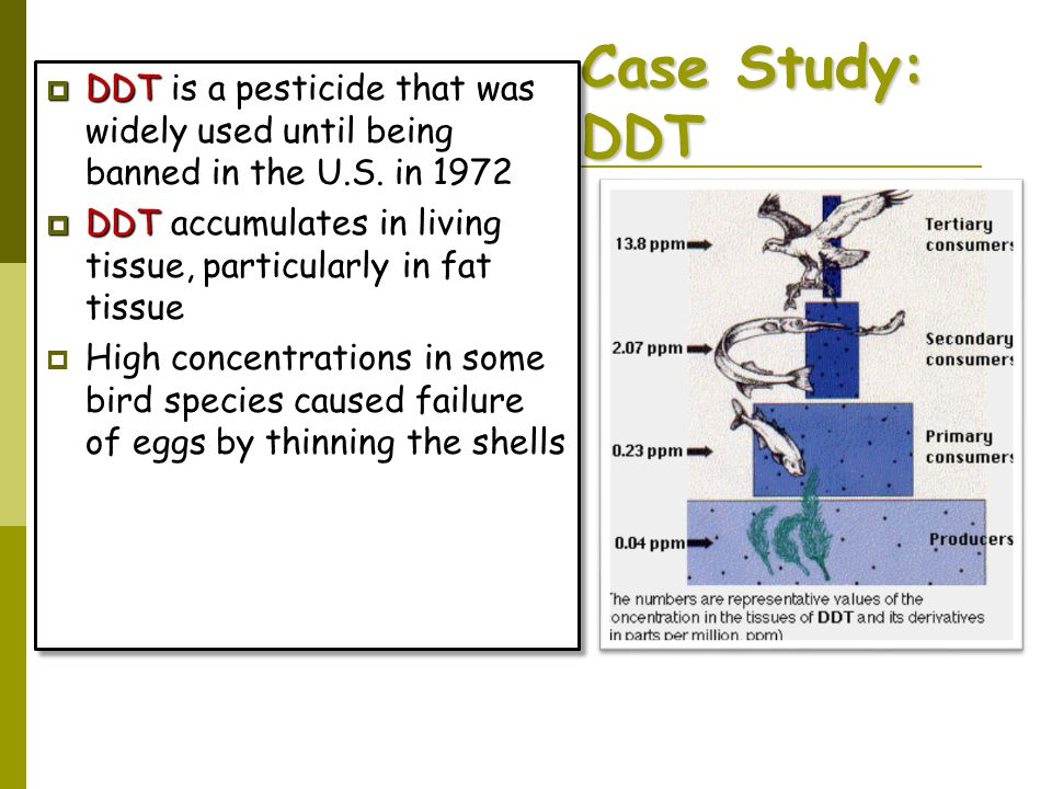 Case Study: DDT DDT is a pesticide that was widely used until being banned in the U.S. in 1972.
