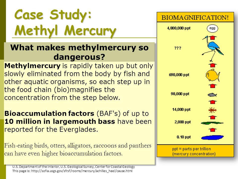 Case Study: Methyl Mercury