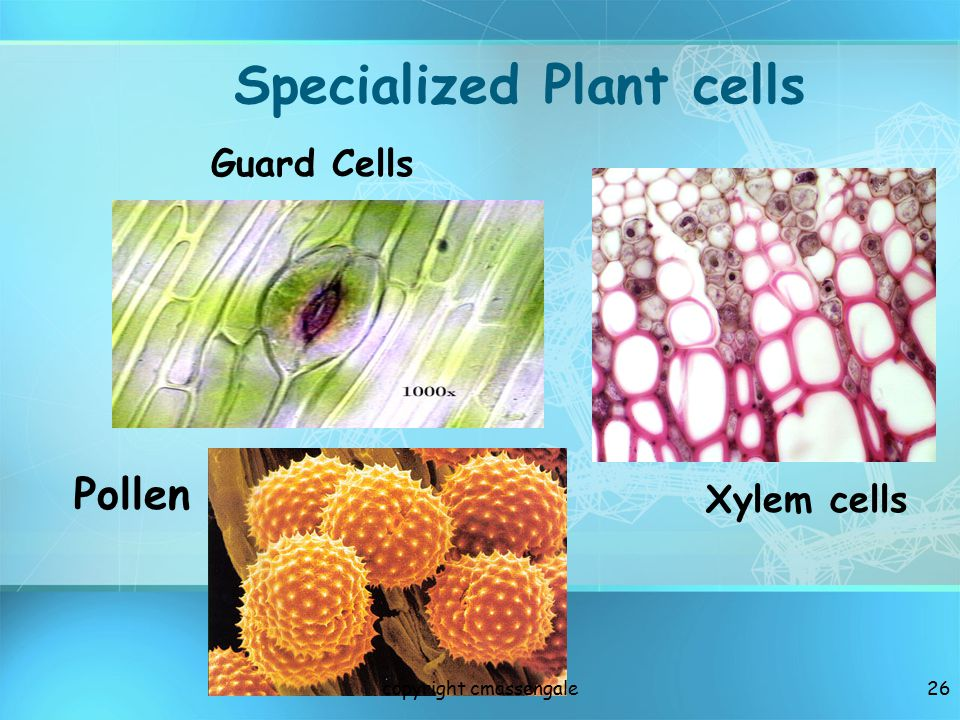 Specialized Plant cells
