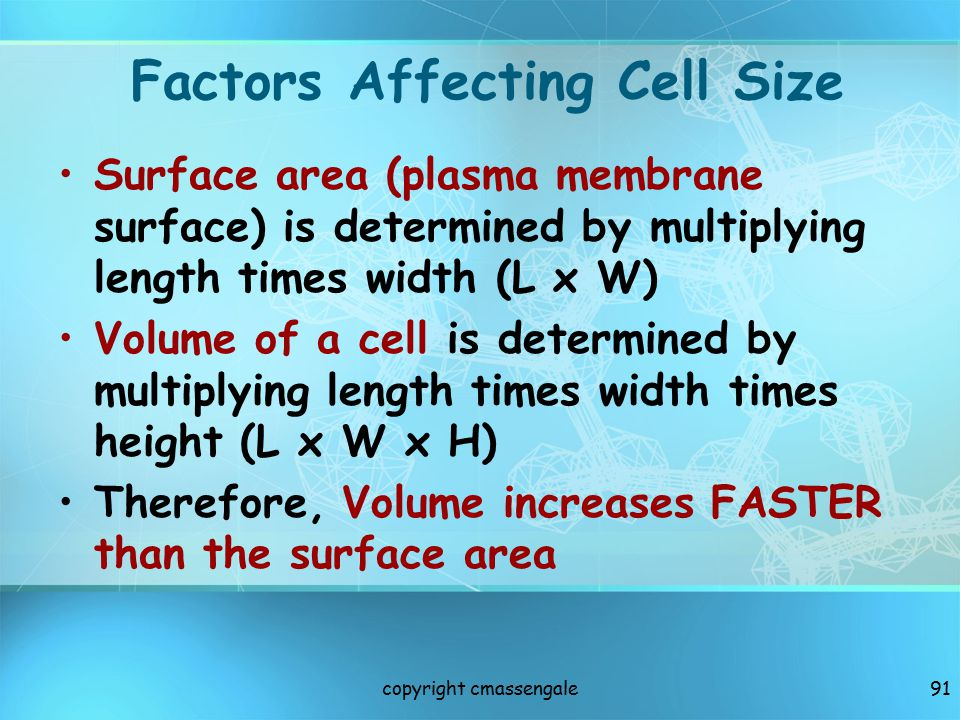 Factors Affecting Cell Size