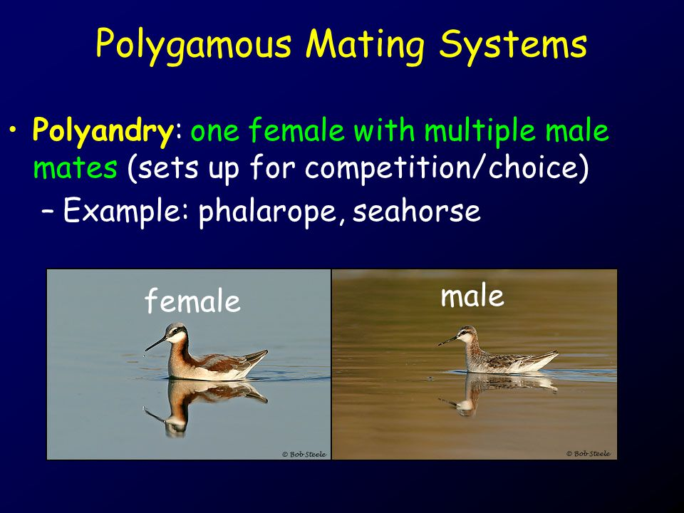 Polygamous Mating Systems
