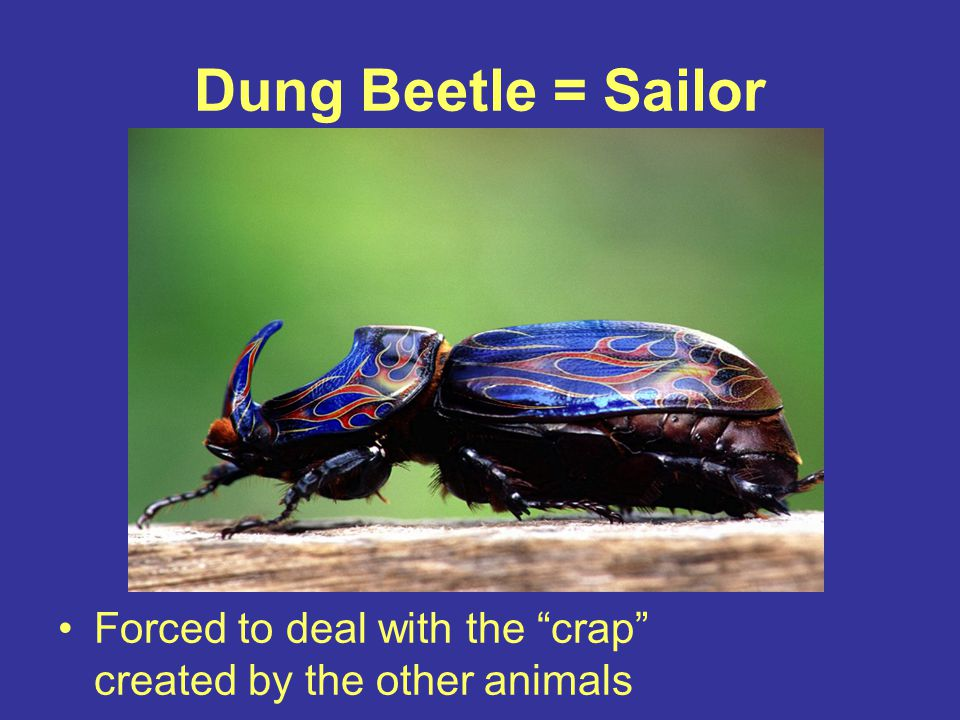 Dung Beetle = Sailor Forced to deal with the crap created by the other animals