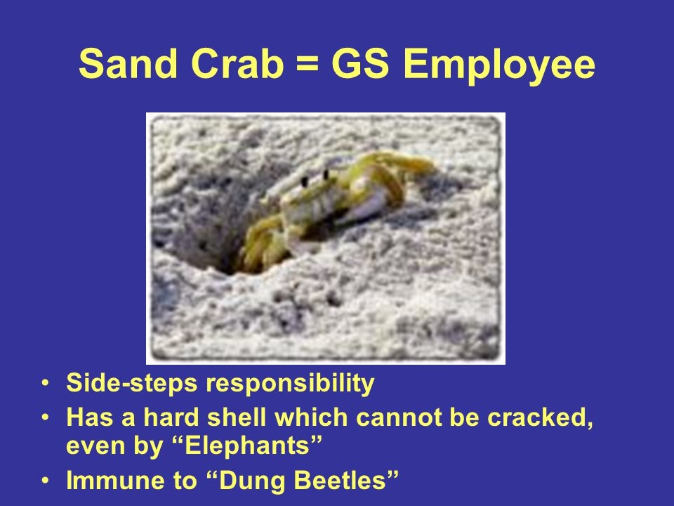 Sand Crab = GS Employee Side-steps responsibility