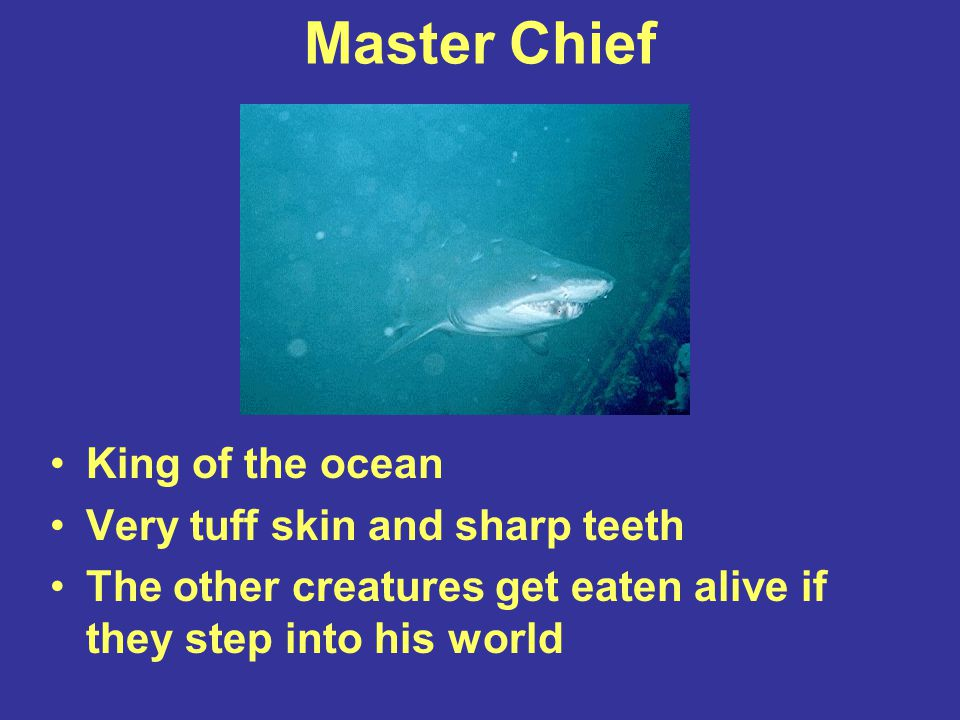 Master Chief King of the ocean Very tuff skin and sharp teeth