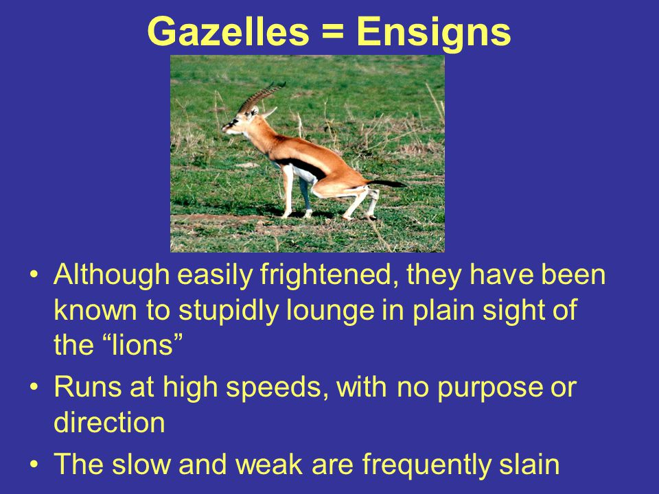Gazelles = Ensigns Although easily frightened, they have been known to stupidly lounge in plain sight of the lions
