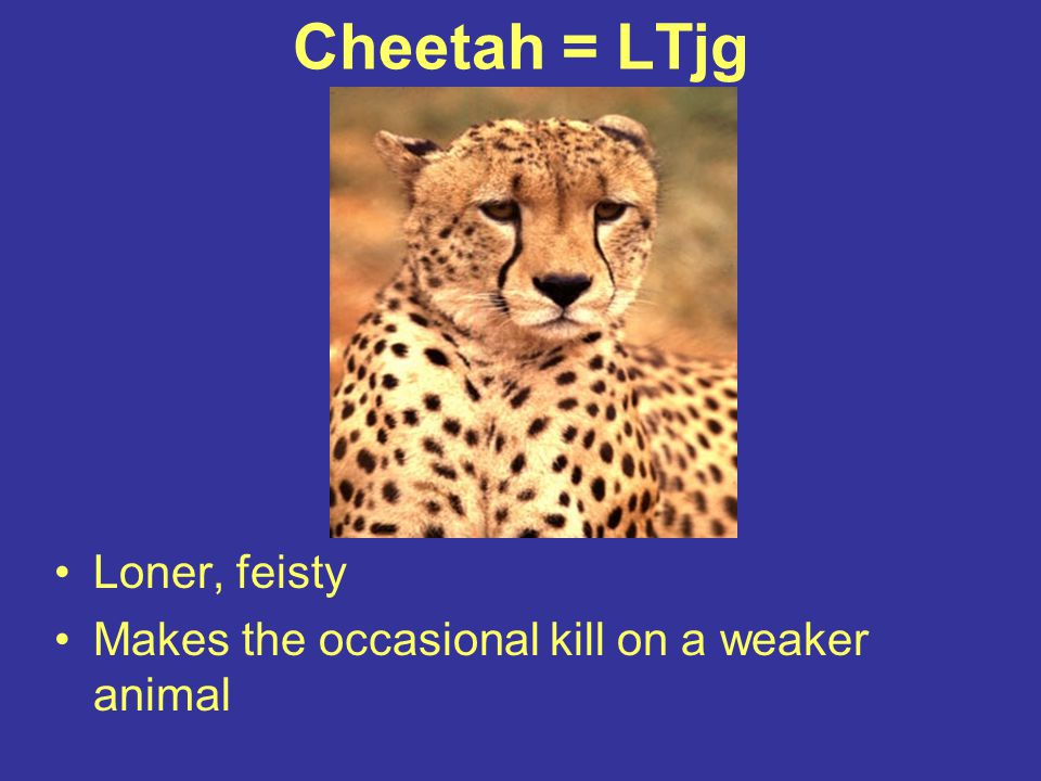 Cheetah = LTjg Loner, feisty
