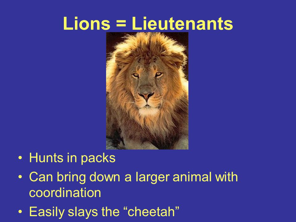 Lions = Lieutenants Hunts in packs