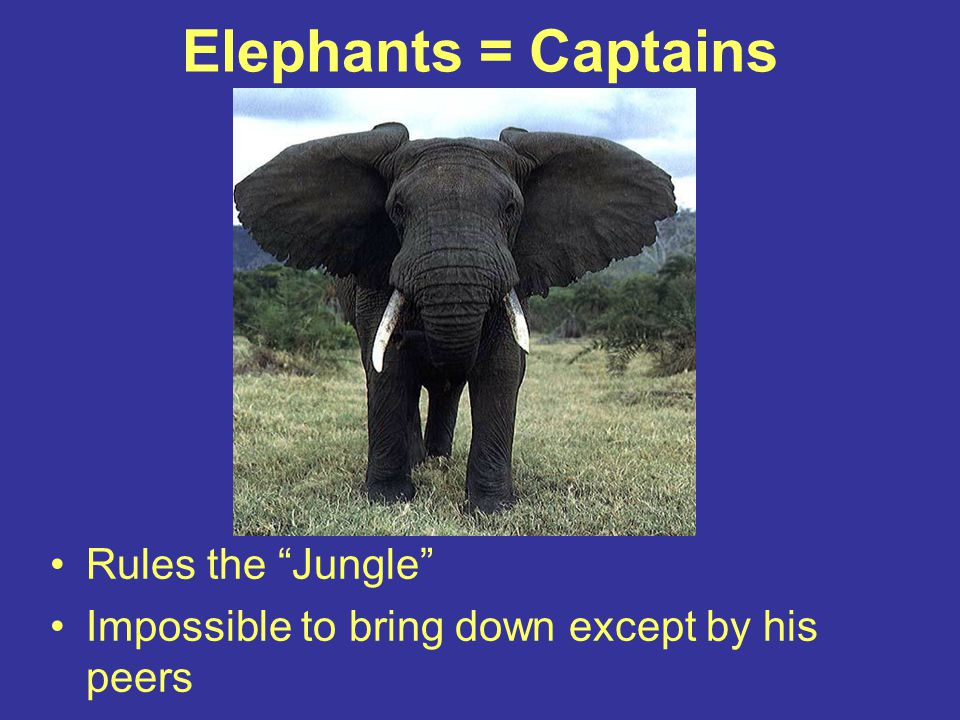 Elephants = Captains Rules the Jungle