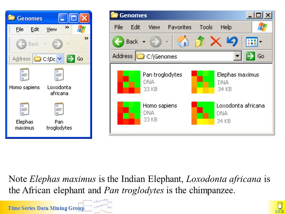 Note Elephas maximus is the Indian Elephant, Loxodonta africana is the African elephant and Pan troglodytes is the chimpanzee.
