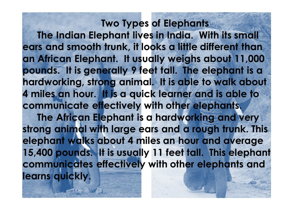 Two Types of Elephants