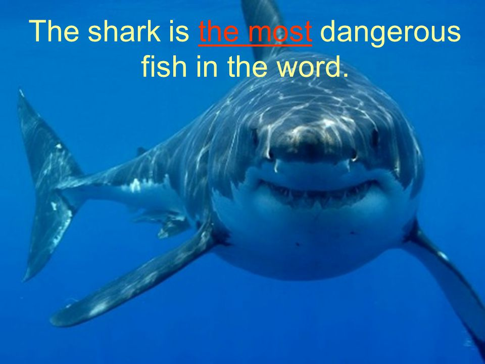 The shark is the most dangerous fish in the word.