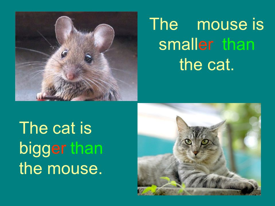 The mouse is smaller than the cat.