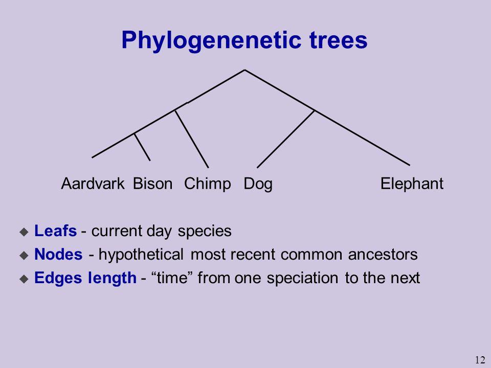 Phylogenenetic trees Aardvark Bison Chimp Dog Elephant