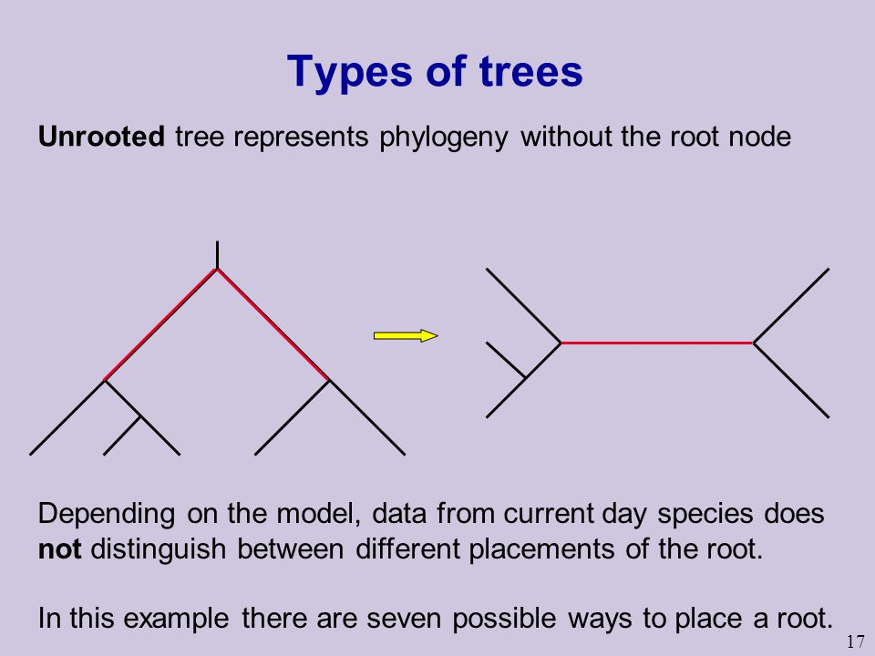 Types of trees Unrooted tree represents phylogeny without the root node.