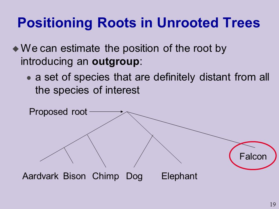 Positioning Roots in Unrooted Trees