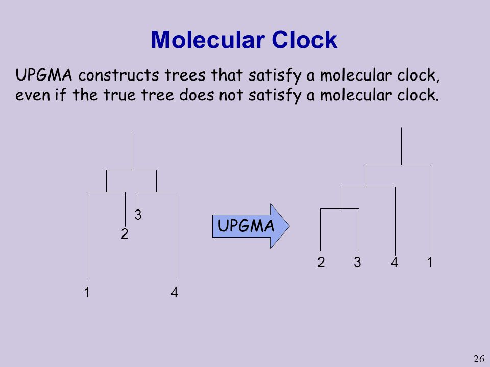 Molecular Clock UPGMA constructs trees that satisfy a molecular clock, even if the true tree does not satisfy a molecular clock.