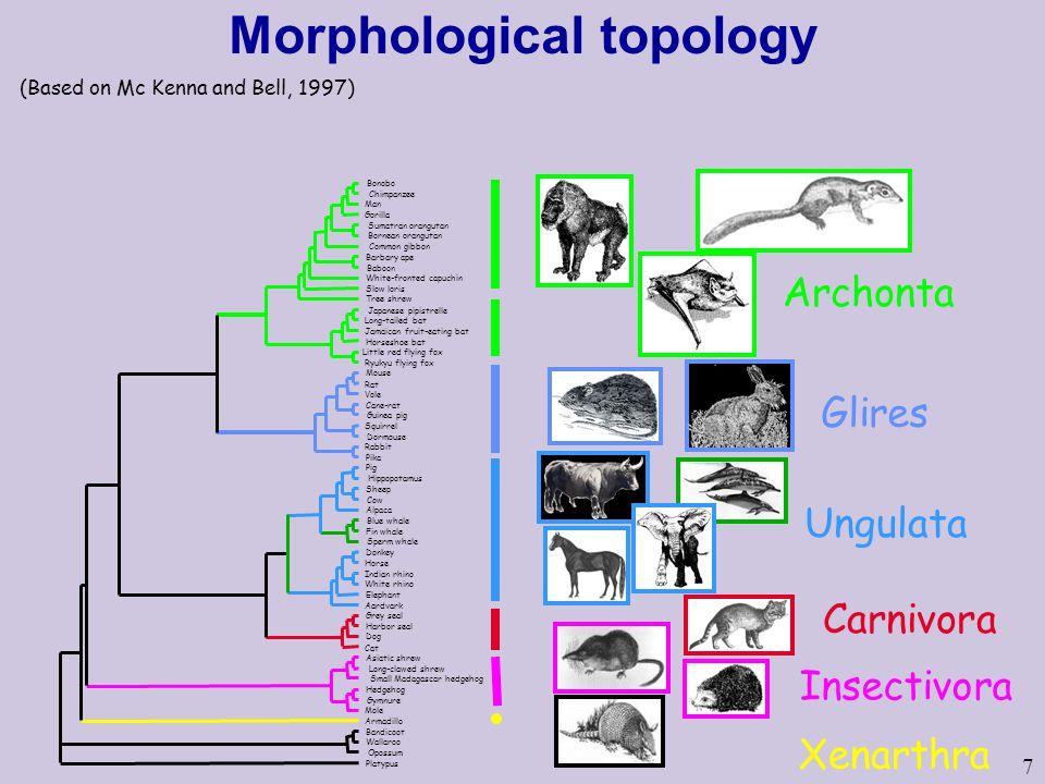 Morphological topology