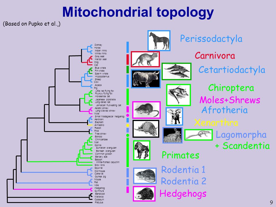Mitochondrial topology