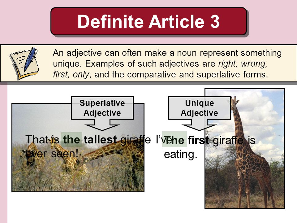 Definite Article 3 That is the tallest giraffe I've ever seen!