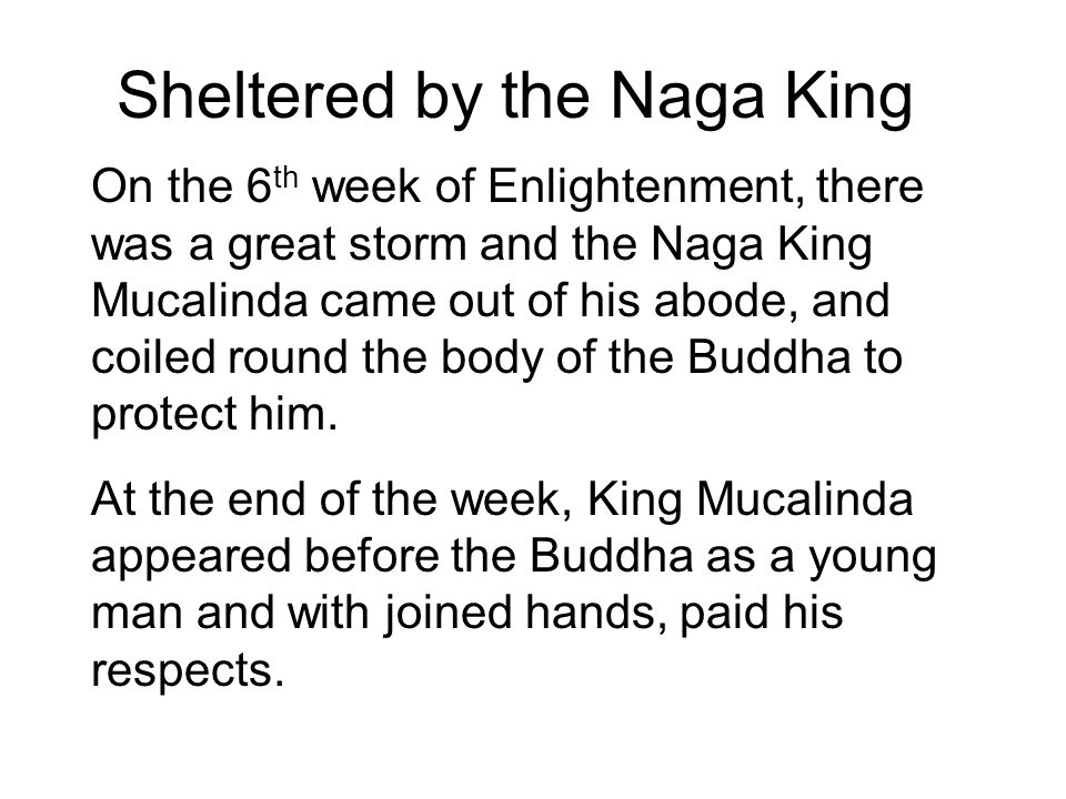 Sheltered by the Naga King