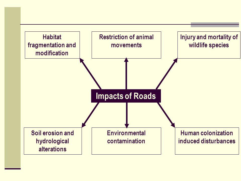Impacts of Roads Habitat fragmentation and modification