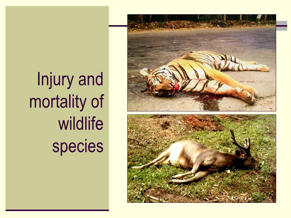 Injury and mortality of wildlife species