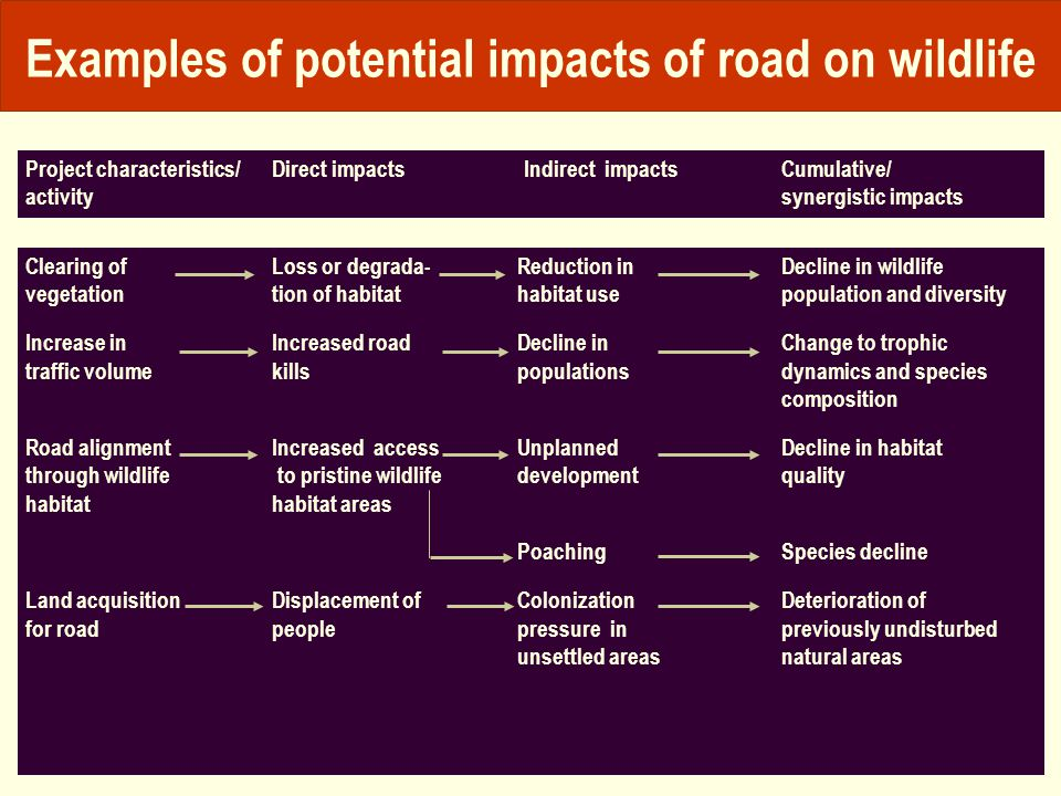 Examples of potential impacts of road on wildlife