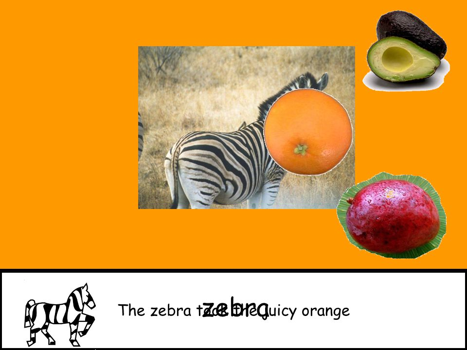 The zebra took the juicy orange