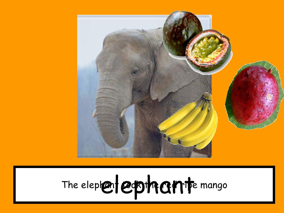 The elephant took the red ripe mango