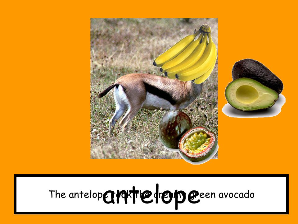 The antelope took the creamy green avocado