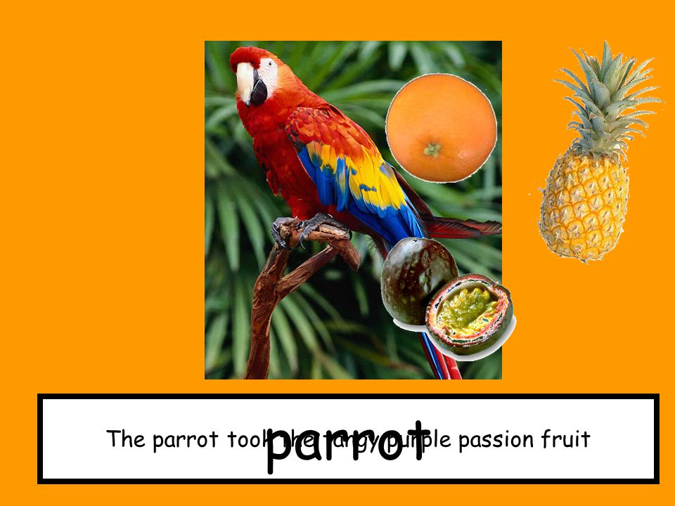 The parrot took the tangy purple passion fruit