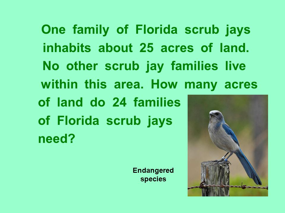 One family of Florida scrub jays inhabits about 25 acres of land.