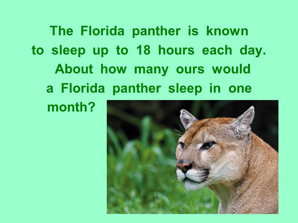 The Florida panther is known to sleep up to 18 hours each day.