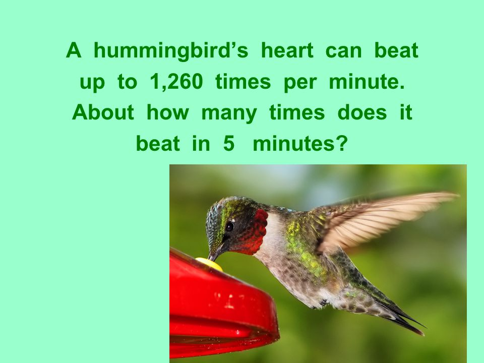 A hummingbird's heart can beat About how many times does it