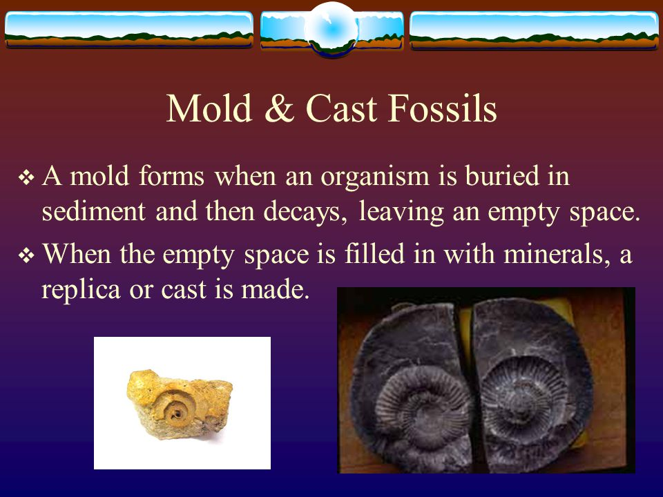Mold & Cast Fossils A mold forms when an organism is buried in sediment and then decays, leaving an empty space.