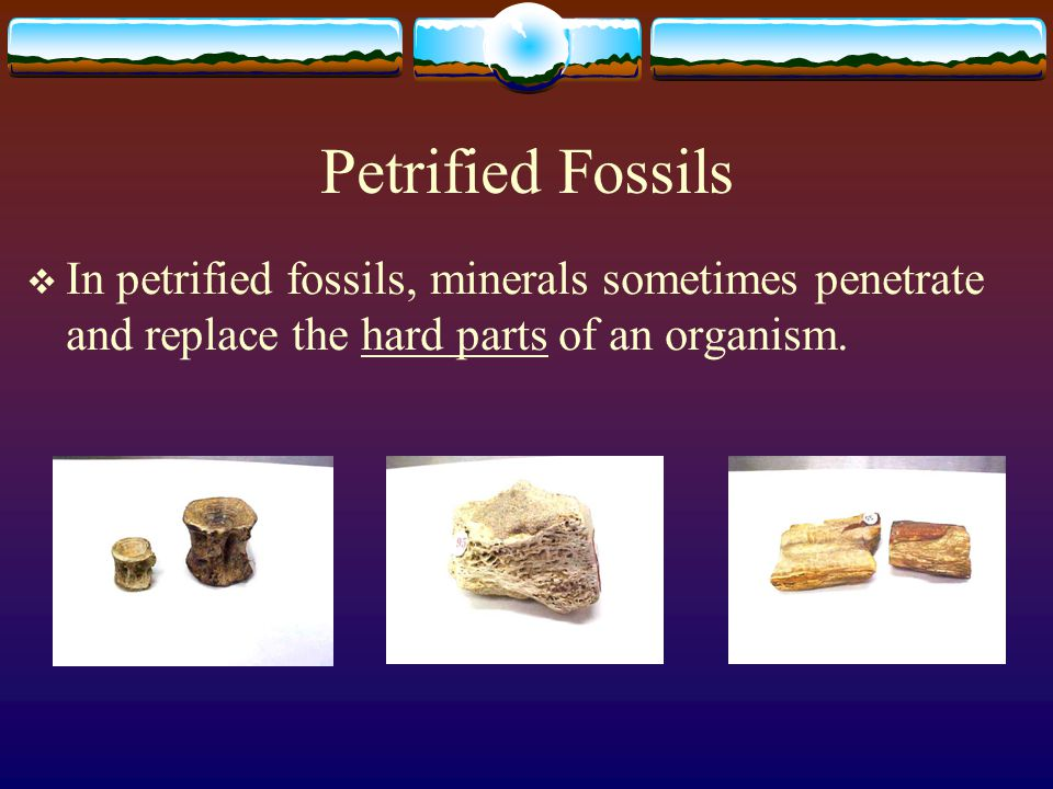 Petrified Fossils In petrified fossils, minerals sometimes penetrate and replace the hard parts of an organism.