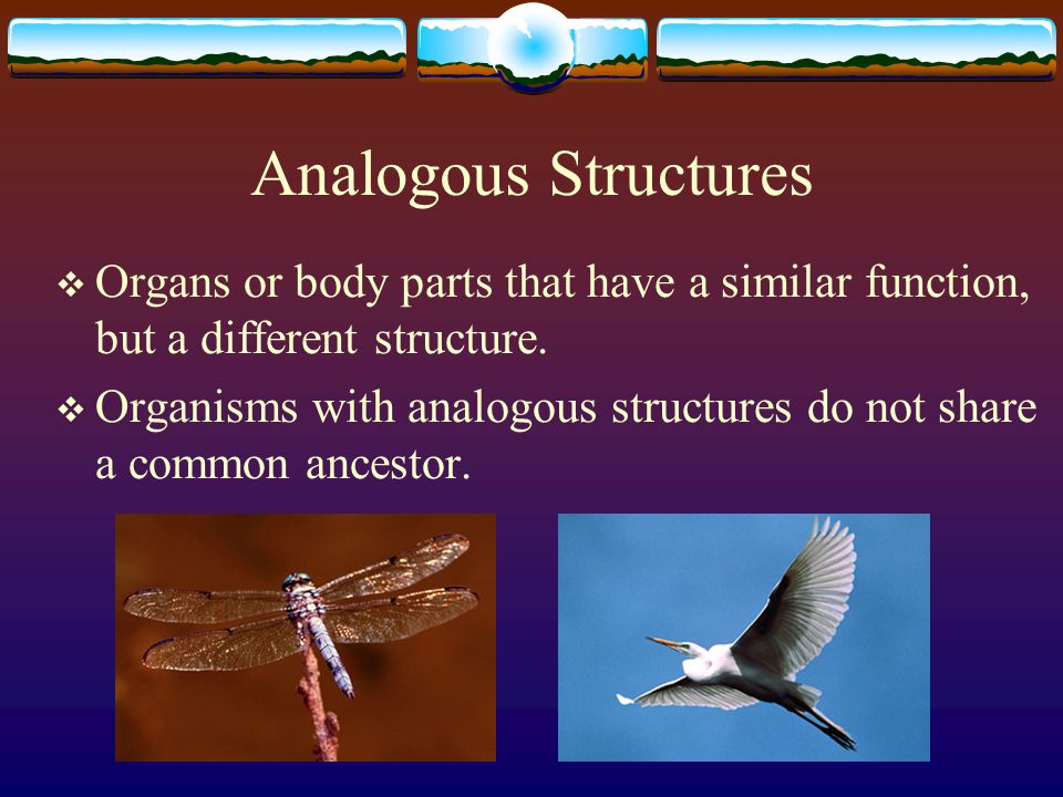 Analogous Structures Organs or body parts that have a similar function, but a different structure.