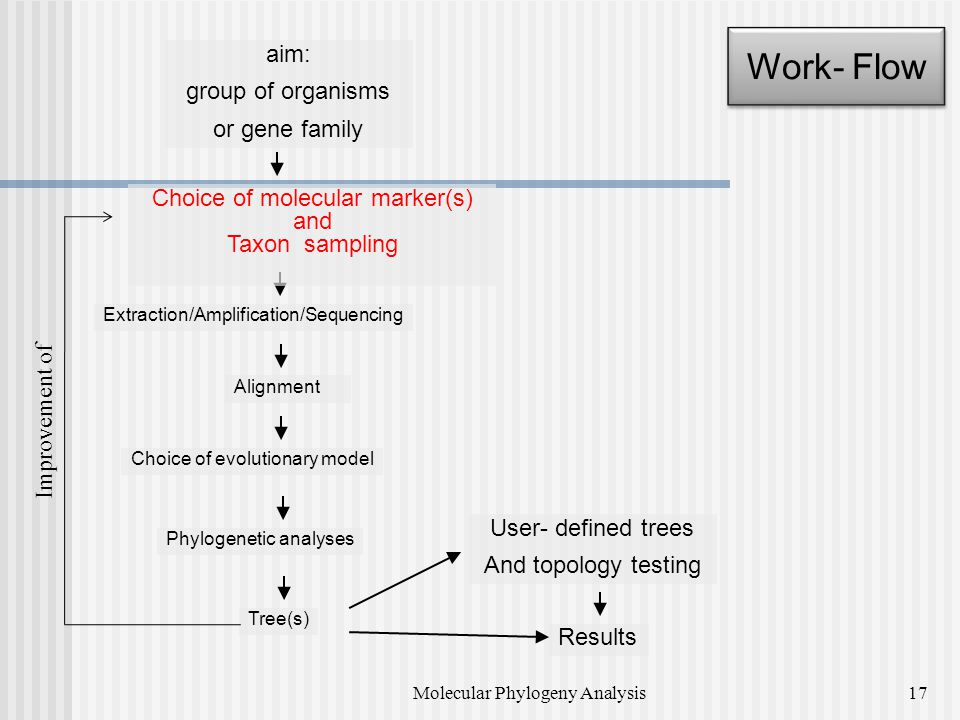 Work- Flow aim: group of organisms or gene family