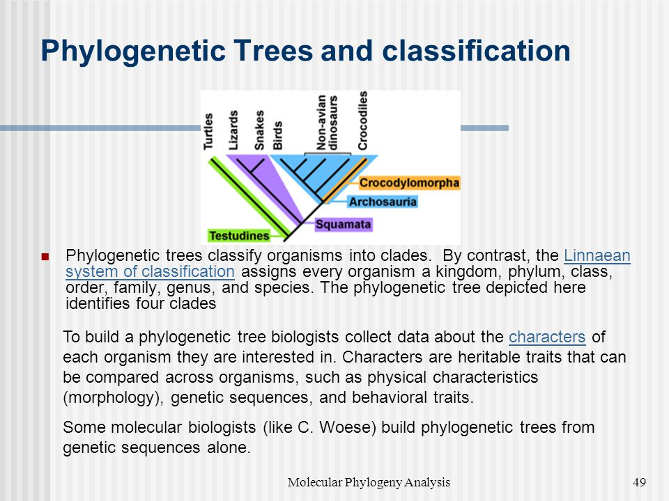 Phylogenetic Trees and classification