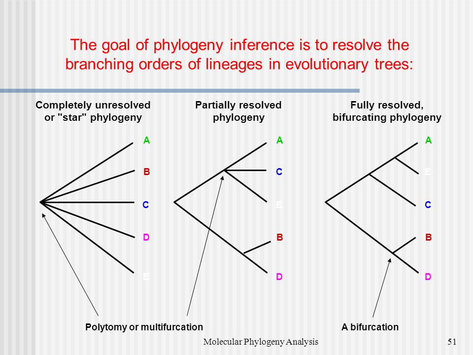 Completely unresolved bifurcating phylogeny