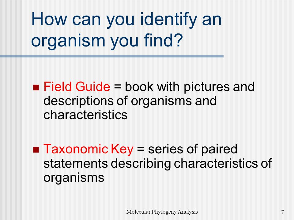 How can you identify an organism you find
