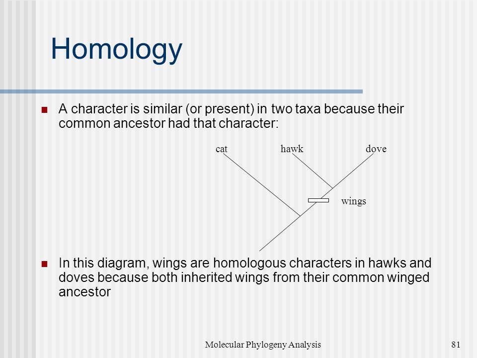 Molecular Phylogeny Analysis