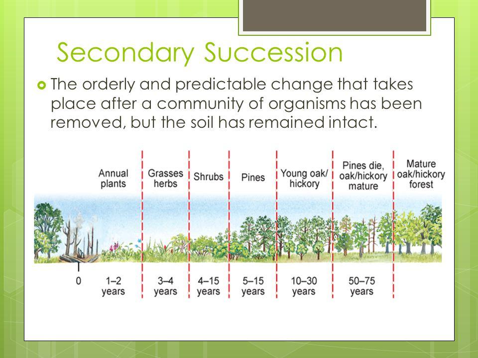 Secondary Succession