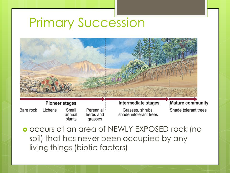 Primary Succession occurs at an area of NEWLY EXPOSED rock (no soil) that has never been occupied by any living things (biotic factors)