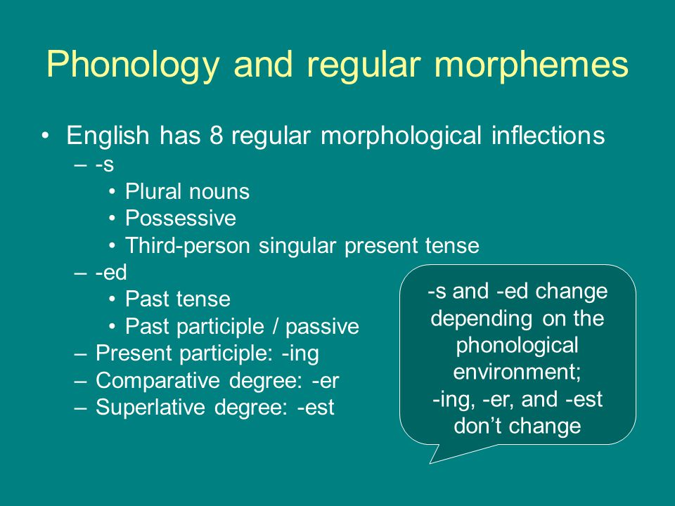 Phonology and regular morphemes